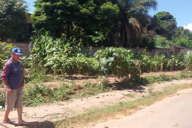 Moradores do bairro Gabiroba, em Itabira, acusam fiscais da prefeitura de destruírem horta comunitária
