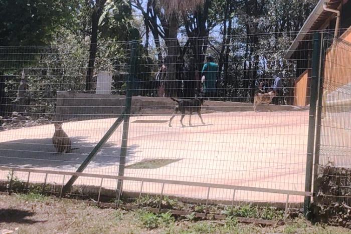 Minas ganha centro de referência de manejo de animais domésticos