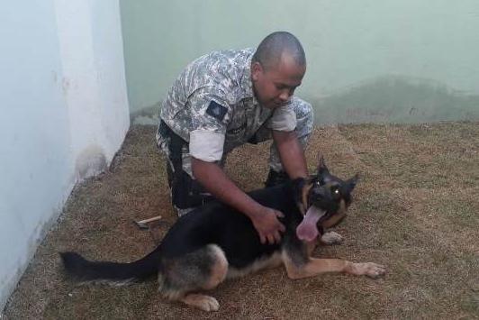 Cães do Presídio de Pirapora contribuem com operações policiais e segurança de unidades prisionais