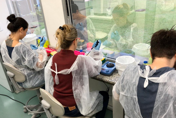 Cientistas sequenciam genomas do coronavírus em Minas Gerais